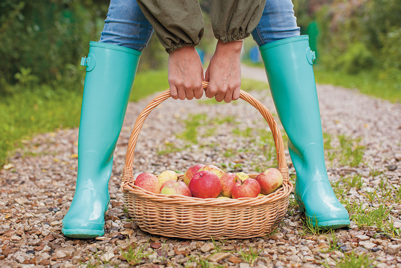 aqua boots with basket full of apples